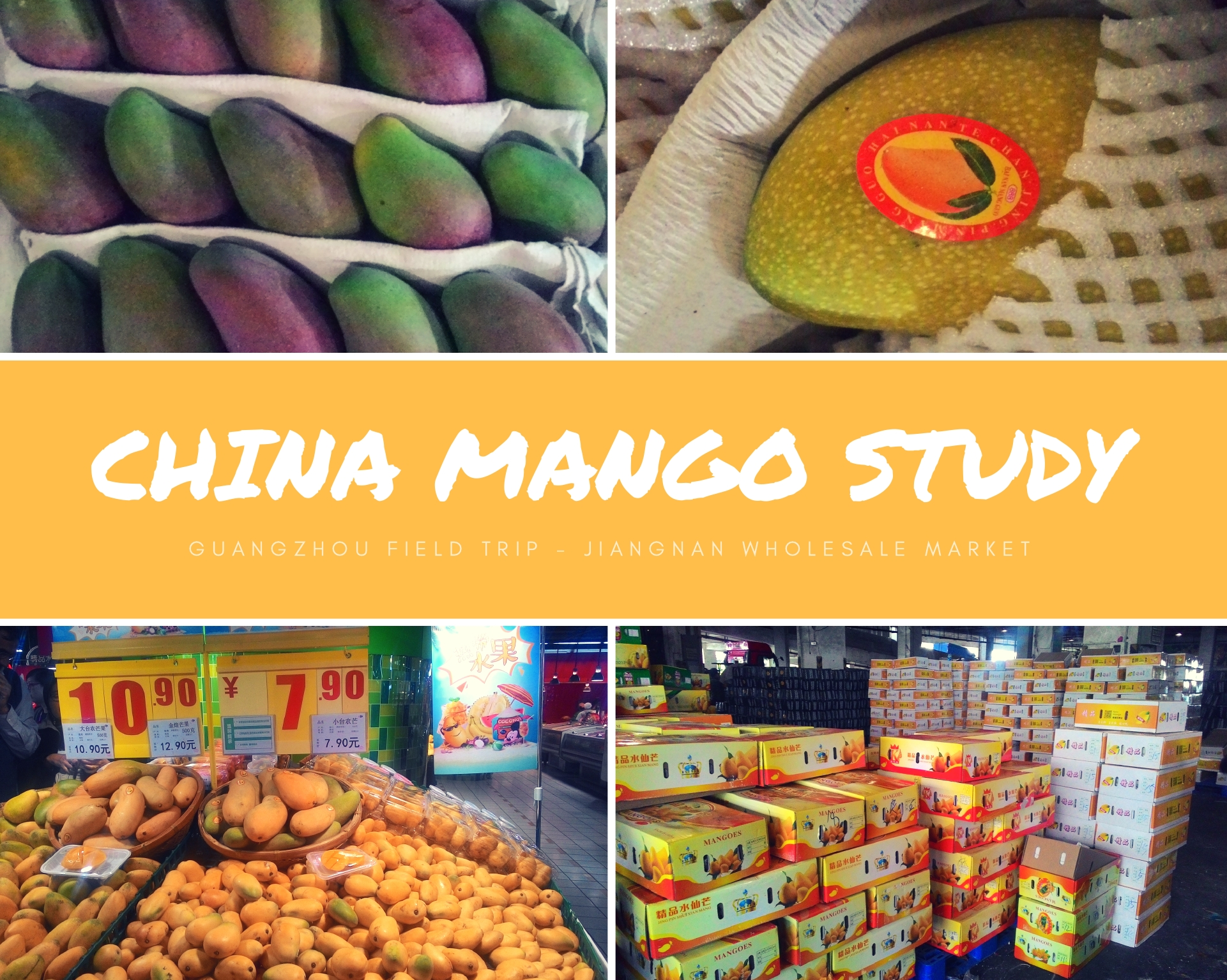 China Mango Study- Guangzhou Field Trip